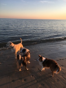 life dogs (15)