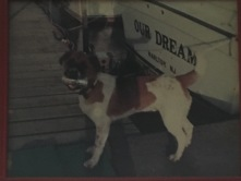 life dogs (2)
