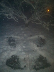 snow angel (2)