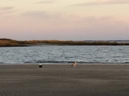 sunset walk oct 17 (34)