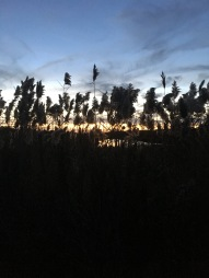 sunset walk oct 17 (94)