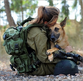 20-army-dogs-in-action
