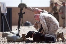 6-army-dogs-in-action