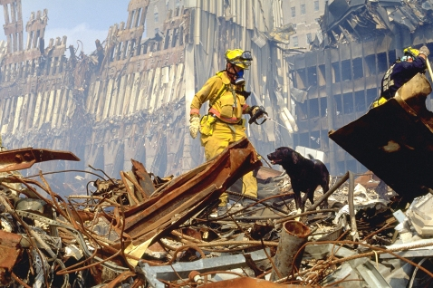 Dog and Handler on Rubble Pile.