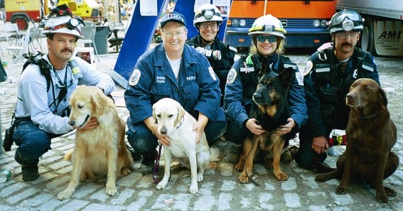 file_20344_what-happened-to-the-rescue-dogs-at-ground-zero