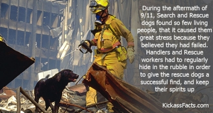 Rescue-Dogs-Couldnt-Handle-The-Loss-Of-Life-Hope-During-9-11