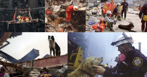 rescue-dogs-of-911