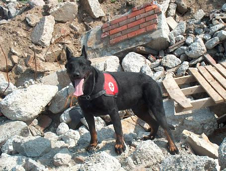 search-and-rescue-dog