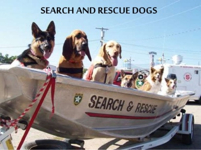 search-and-rescue-dogs-1-638