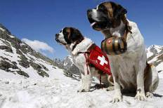 switzerland_saint_bernard_d