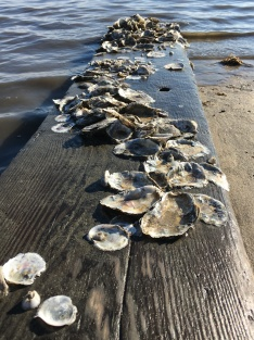 oysters walking the plank