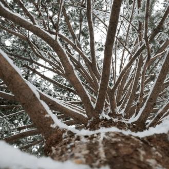 tree webbing
