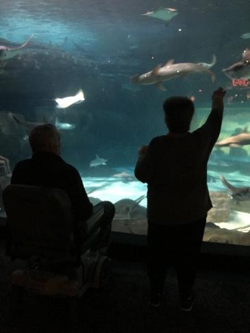 Ripleys Aquarium in the Smokeys