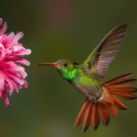 animals_hero_hummingbird_1