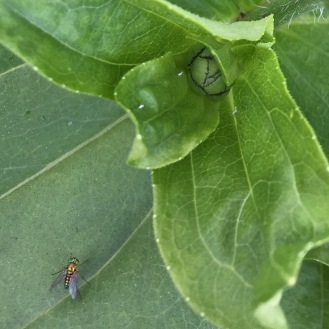bugs life10