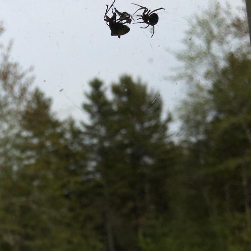bugs life 3