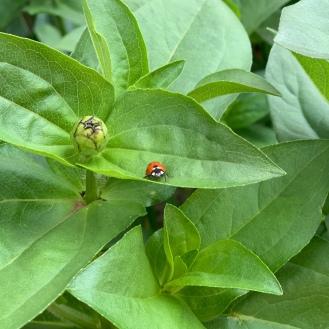 bugs life6